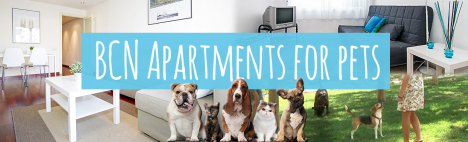 Top 5 appartements avec animaux