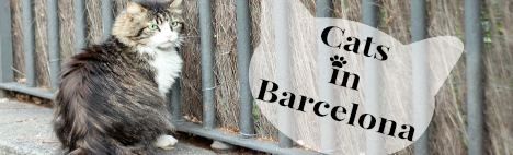 La situation des chats à Barcelone