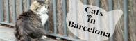 Gatti a Barcellona