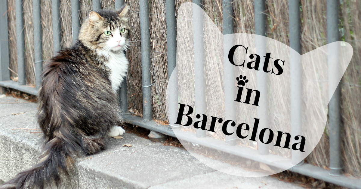 The Cats of Barcelona