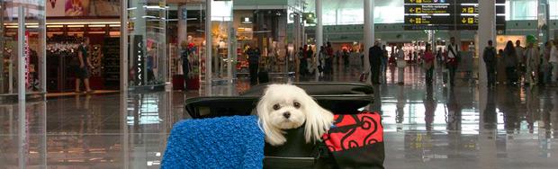 Hund im Flughafen