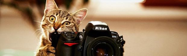 Katze mit Kamera