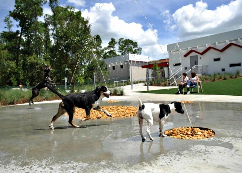 Mascotas libres en los parques de Barcelona