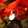 Calles decoradas en las fiestas de Gracia 7