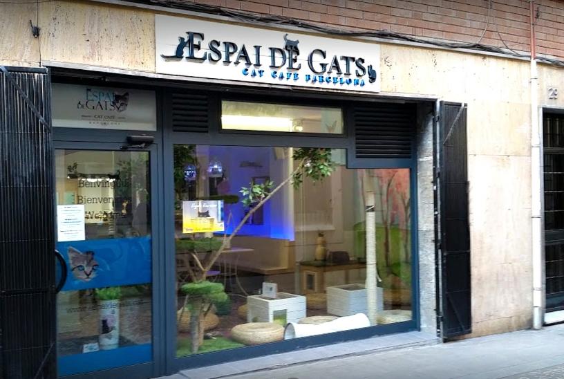 Espai de Gats Cat Café Barcellona