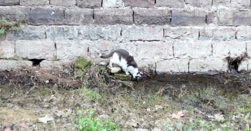 Gato callejero en Barcelona