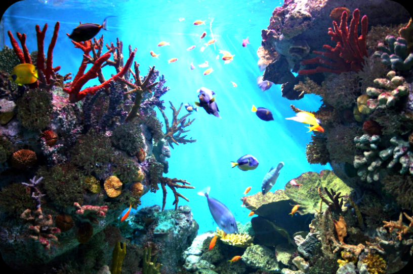 Akvarium av  Barcelona