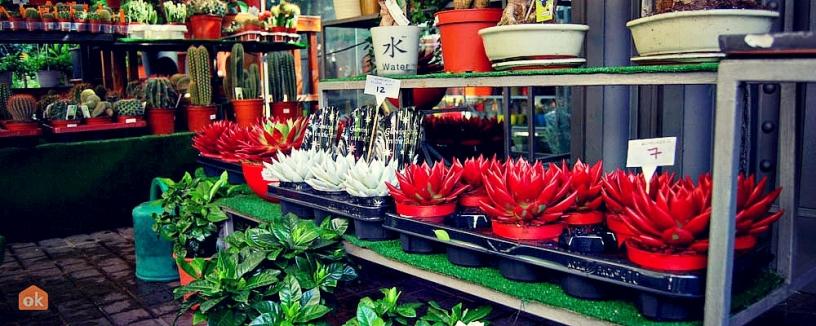 Растения, Цветочный рынок