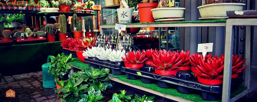 Blommor, Mercat de les Flors
