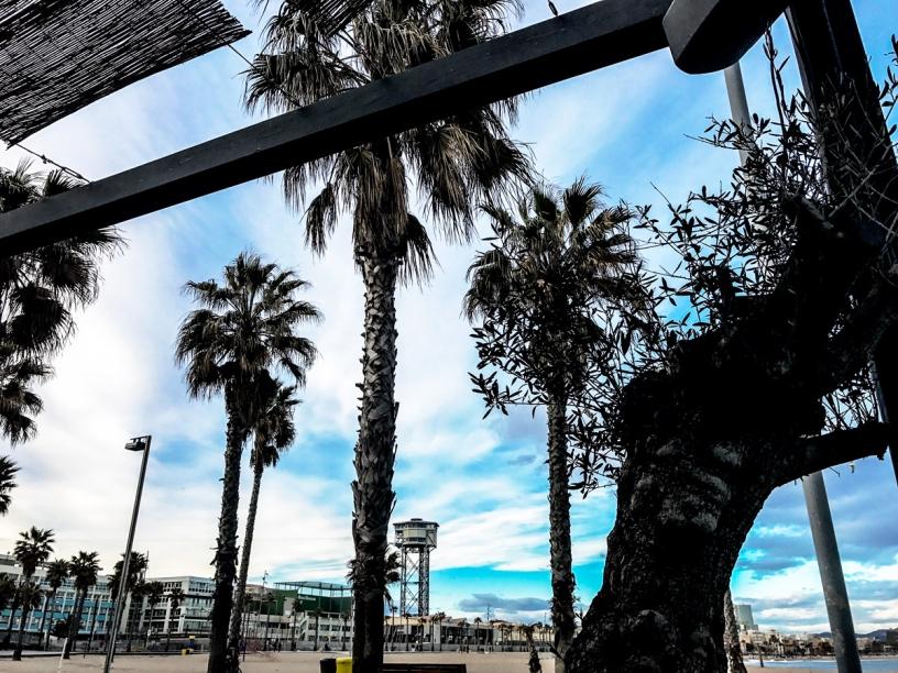 Palmtrees Sant Sebasta Barcelona