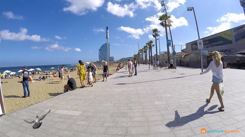 paloma beach barceloneta