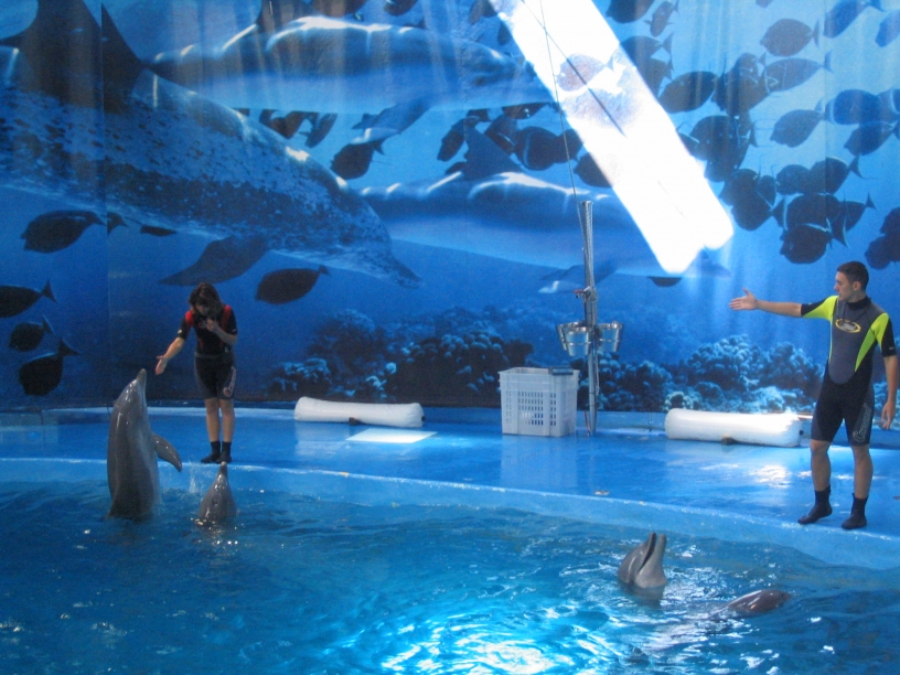 Visit Barcelona Zoo: dolphins