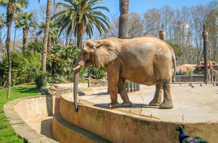 Le zoo de Barcelone